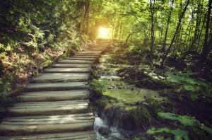 path to light copy2